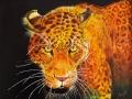103. Afrikaanse luipaard
